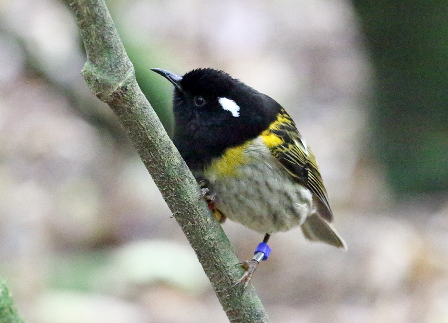 stitchbird 01