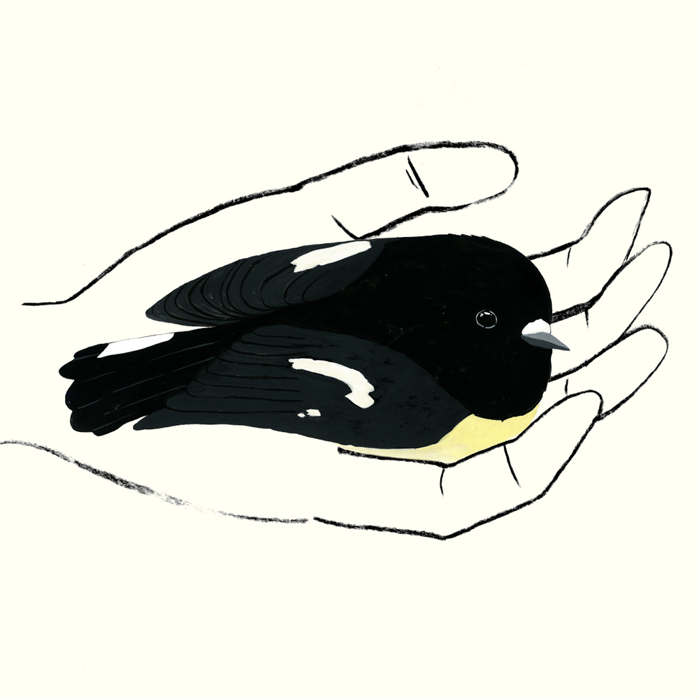 Tomtit in hand by melissa boardman