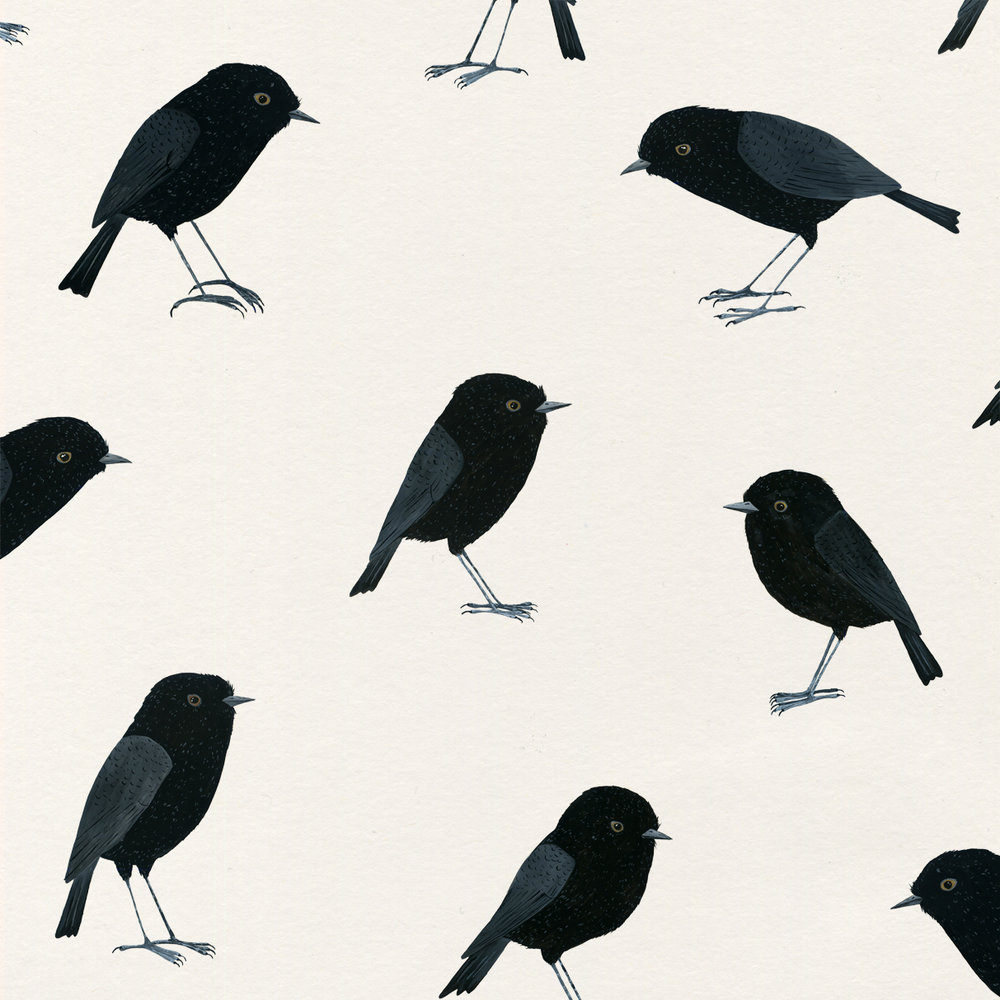 Black Robin Illustrations - for an upcoming series of Greeting Cards that I'm working on.