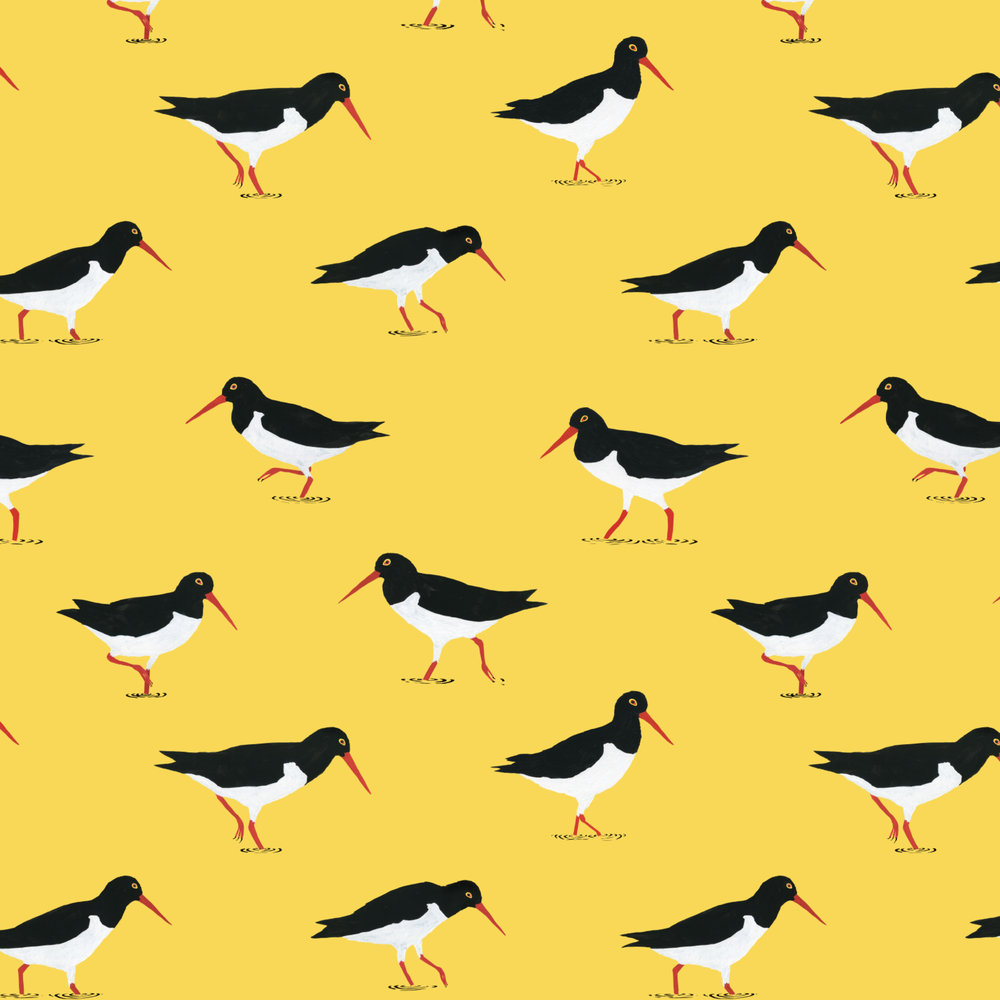 wading oystercatchers pattern