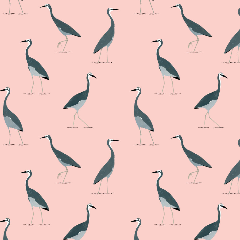 white faced heron pattern
