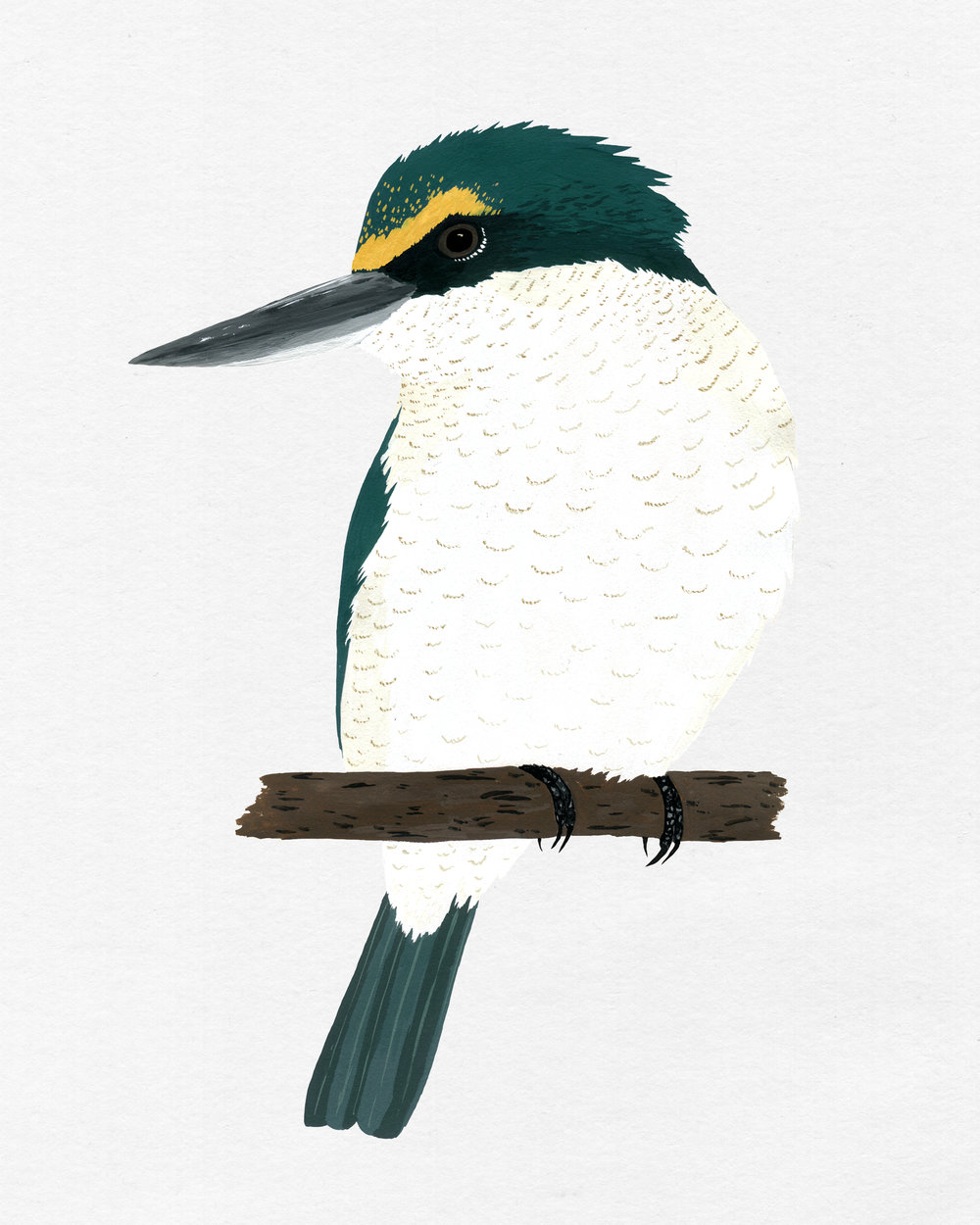 new zealand bird series - kingfisher - kotare
