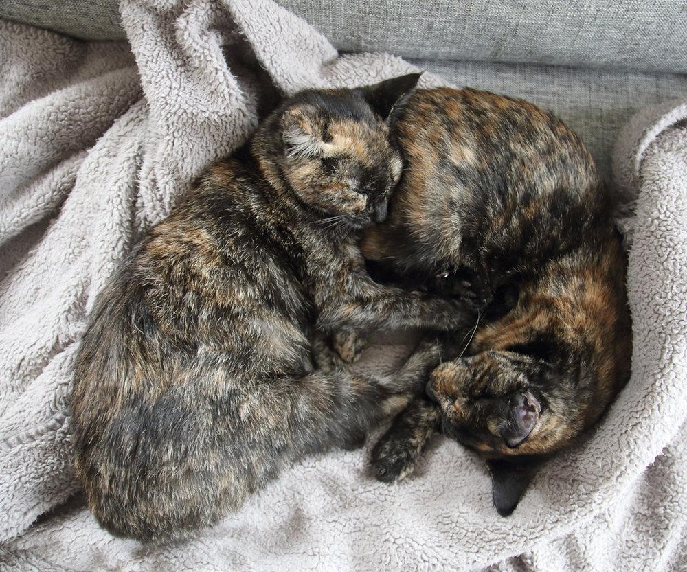 pittenz cuddling.JPG