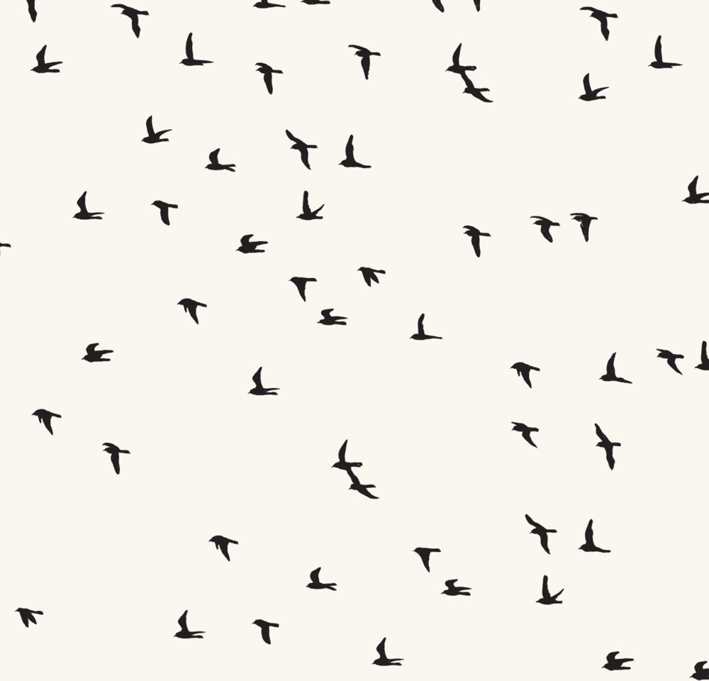 melissa boardman scattered flock of birds.png