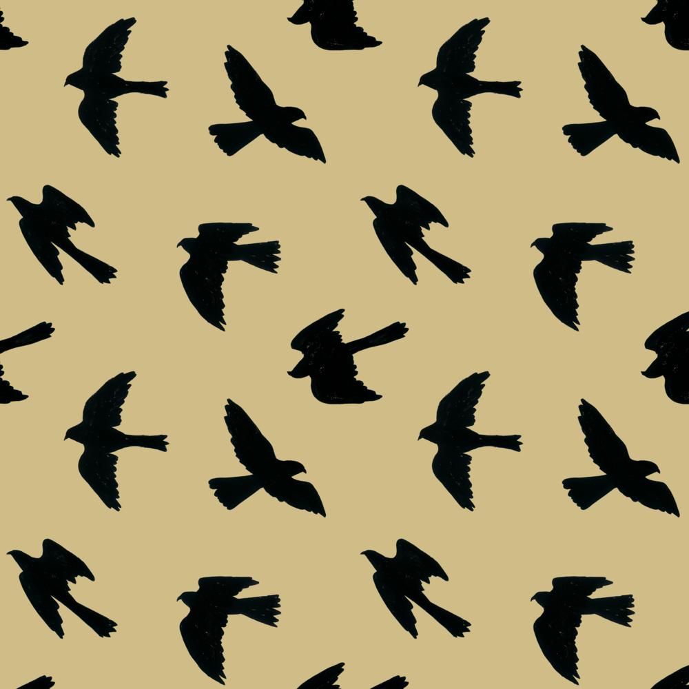 melissa boardman falcon silhouettes black on custard.png