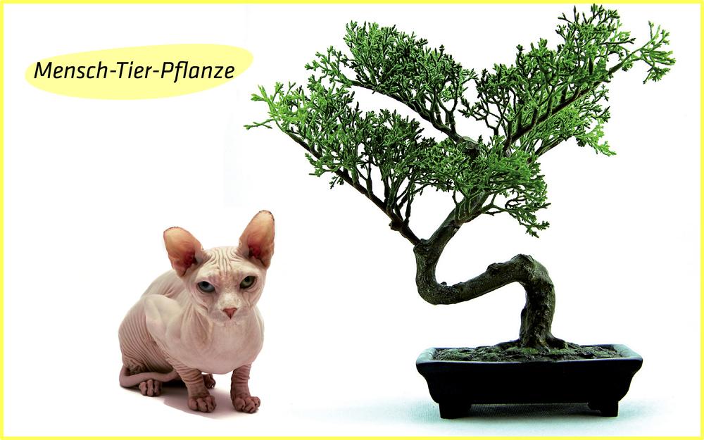 3.mensch_tier_pflanze_text.jpg