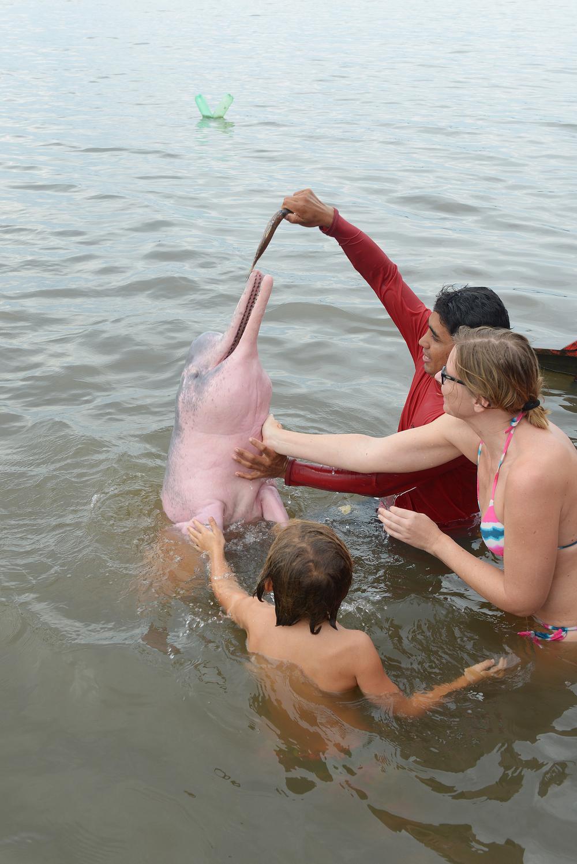 Jokidelfiini Amazooni