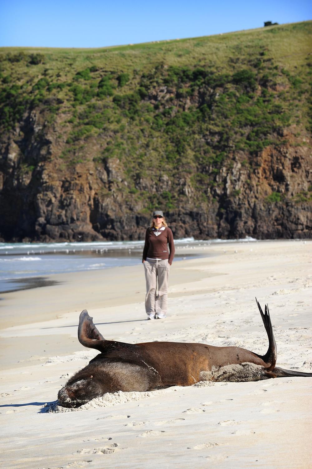 Uusi-Seelanti, matkablogi, matka, ranta, merileijona