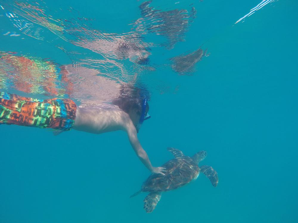 Barbados, matkablogi, matka, merikilpikonna, snorkkeloida, perhematka, latpset matkustaa