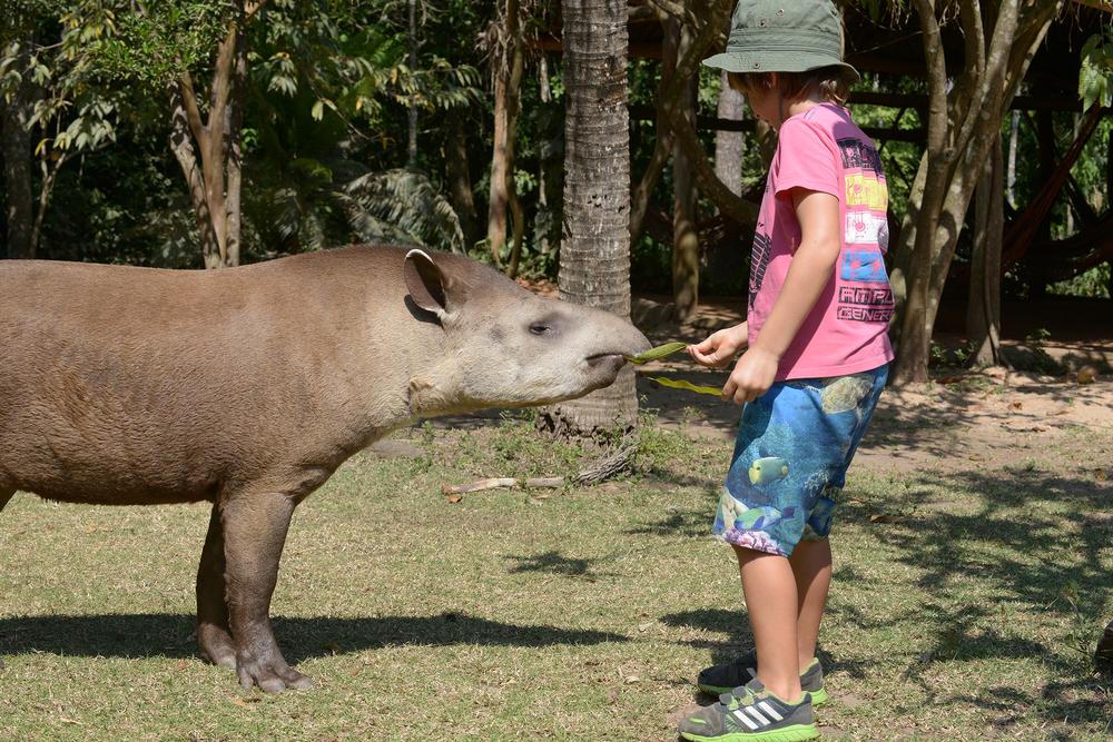 matkablogi, maktka, luontomatka, perhematka, tapiiri, Brasilia, lapset matkustaa