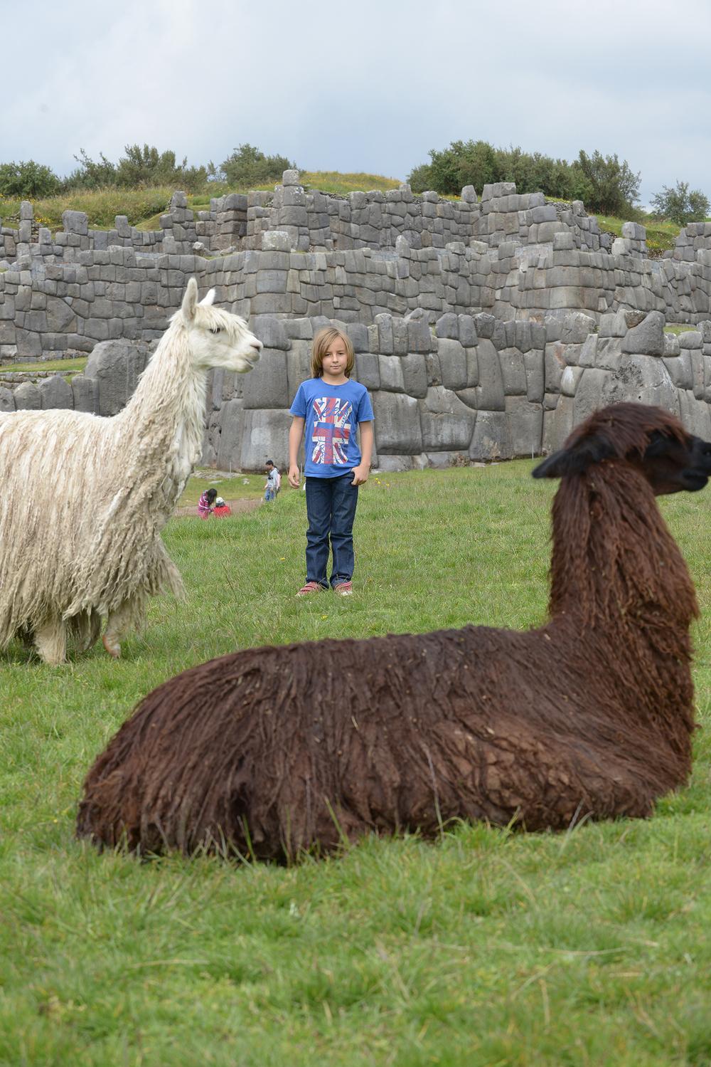 blogi, matkablogi, laama, Peru, Andit, Machu Picchu, Cuzco, lomamatkat, alpakka