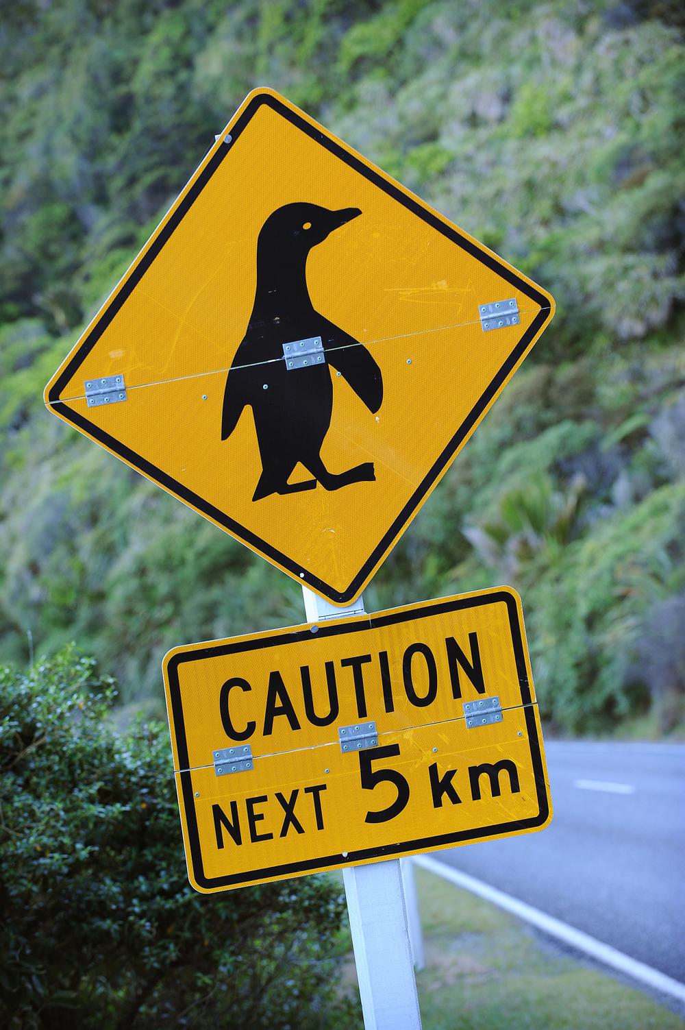 Pingviini, uusi-seelanti, matka, matkablogi, kyltti