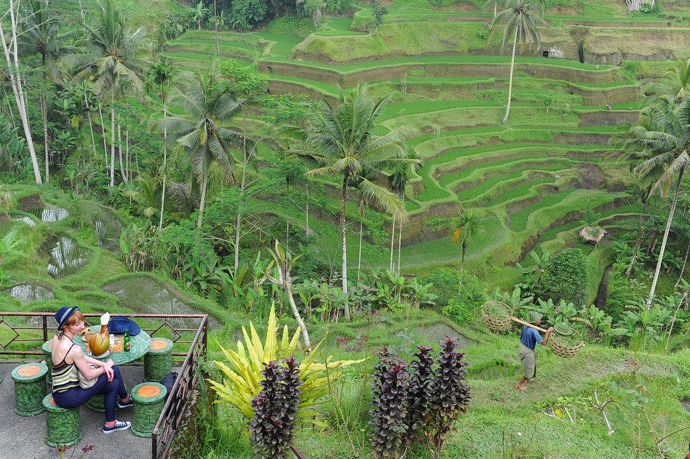 matkablogi, matka, matkailu, loma, lomamatka, Bali, Ubud, riisipelto, riisivainio, kahvila, maisemakahvila
