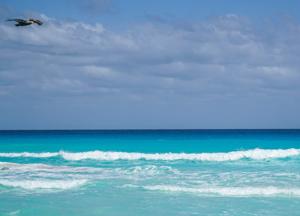 Meksiko, Tulum, meri, lintu, matkablogi, matka, sininen, paratiisi