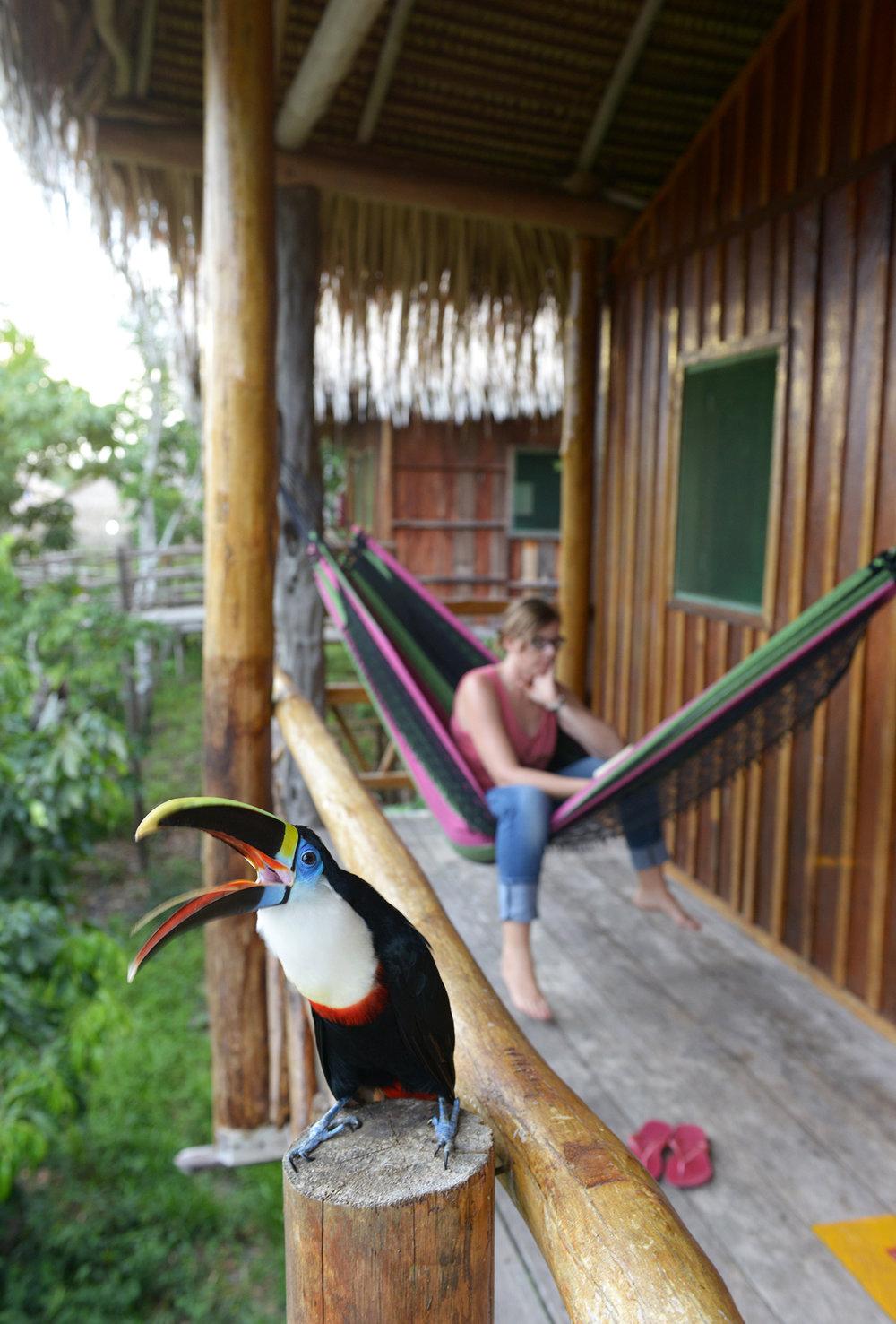 Matkablogi, matka, Amazon, Brasilia, tukaani, matkailu