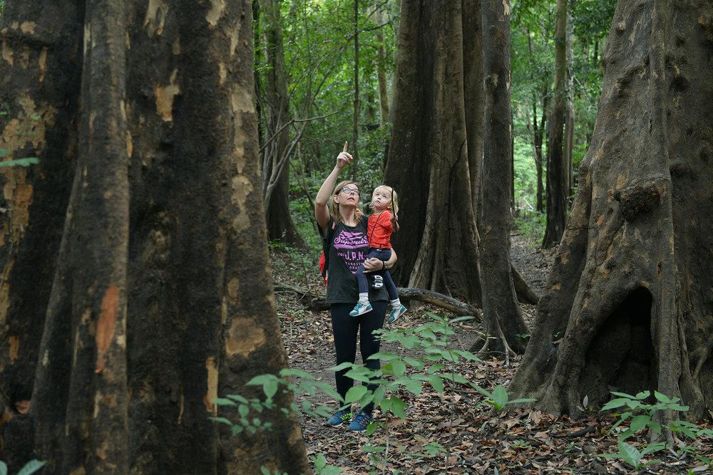 Brasilia, matkablogi, matka, sademetsä, luonto