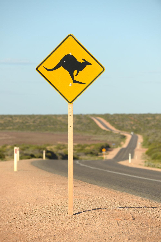 Australia, matkablogi, blogi, matka, outback, tie, kenguru