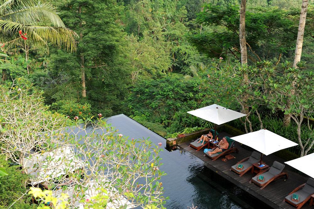 Bali, Indonesia, uima-allas, loma, hotelli, viidakko, vihreä, Ubud