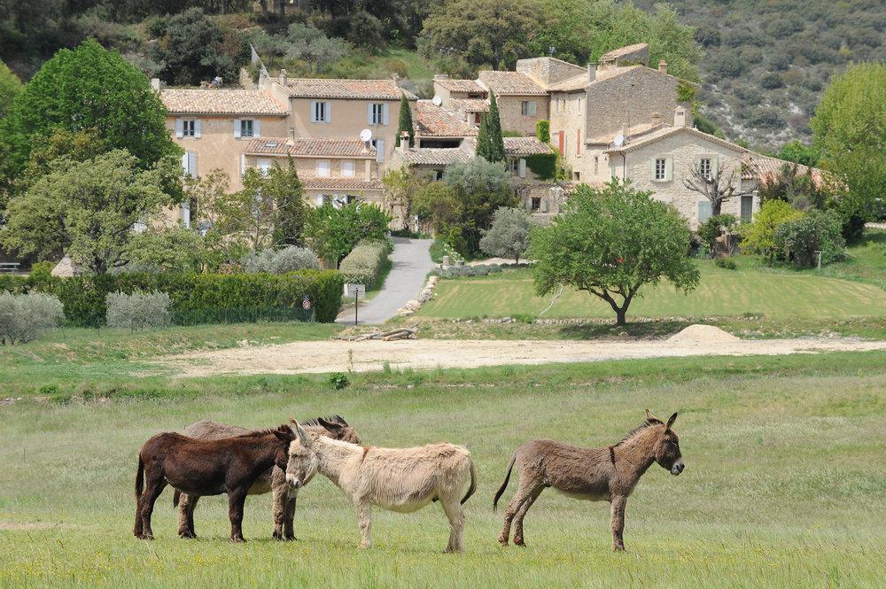 maalaismaisema, Provence, aasi, matka, Ranska