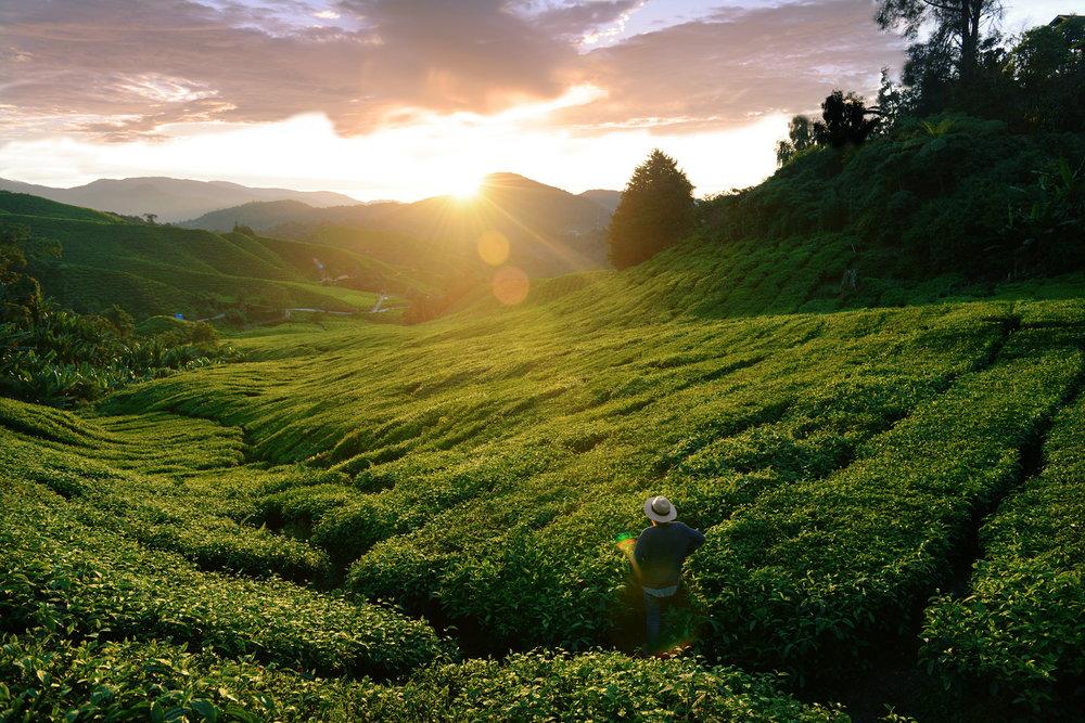 Malasia, Cameron Highlands, maisema