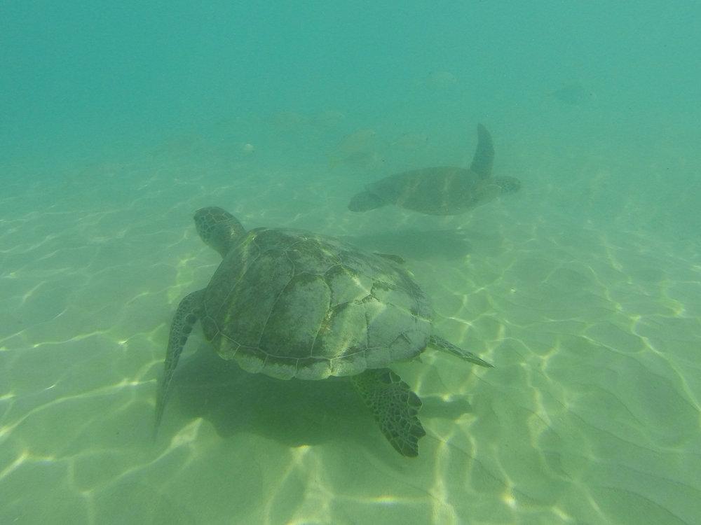 Oman, merikilpikonnat