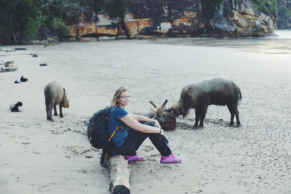 Malesia, Borneo, Bako National Park
