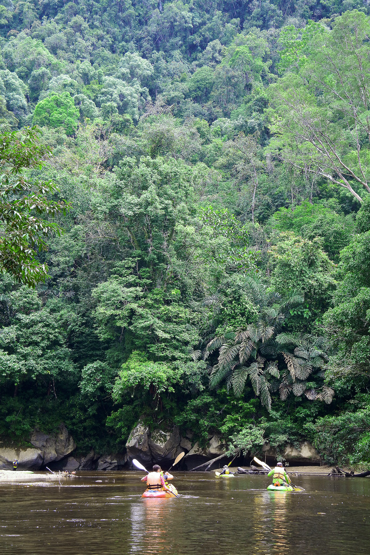 Malesia, sademetsä