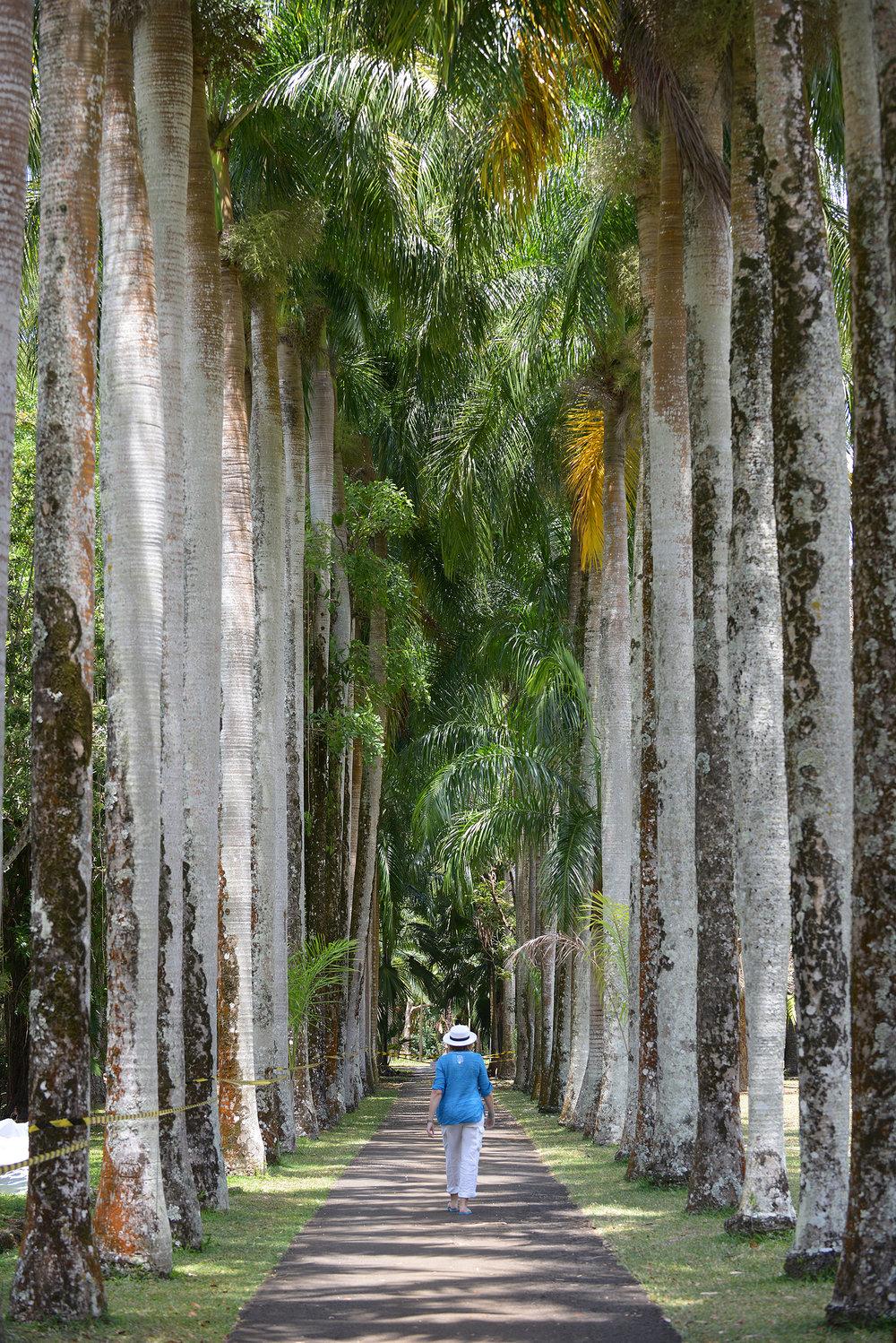 Mauritius, Pamplemousses, kasvitieteellinen puutarha