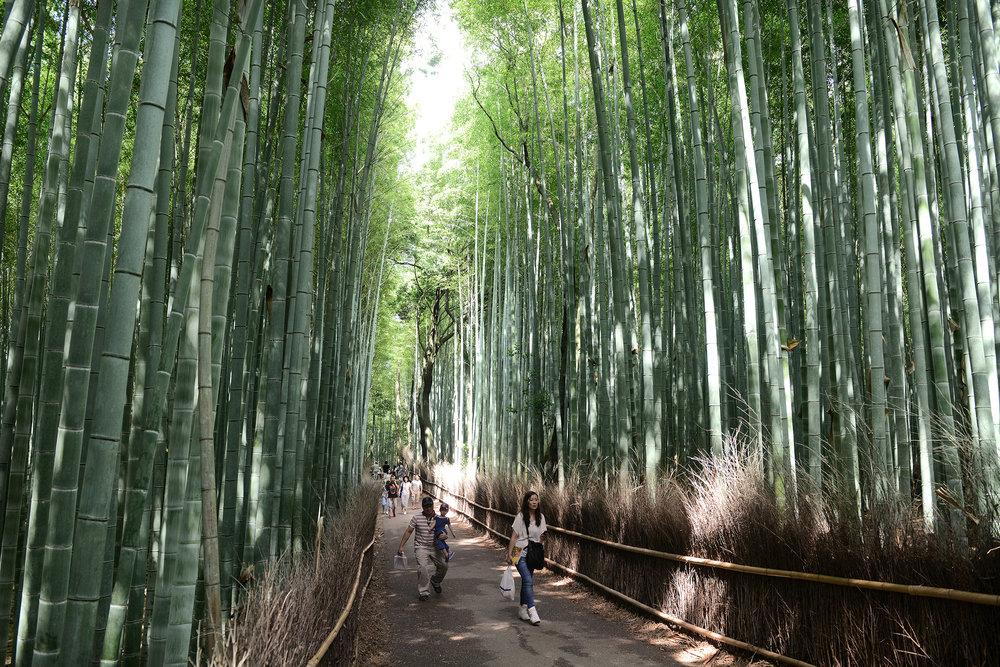 Kioto, Japani, Arashiyama bambumetsä