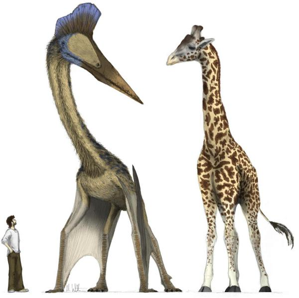 Via: http://www.hopkinsmedicine.org/Press_releases/2009/images/giraffe.JPG