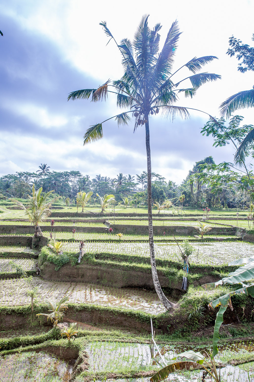 IMG_2648_Bali.jpg