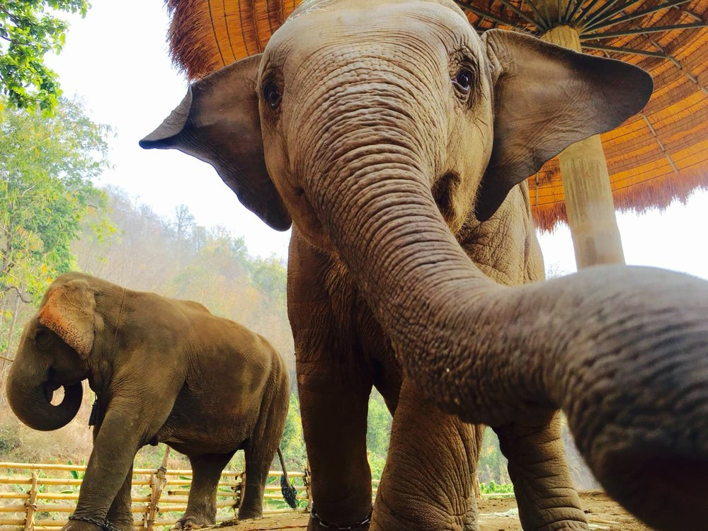 sustainable elephant camp chiang mai