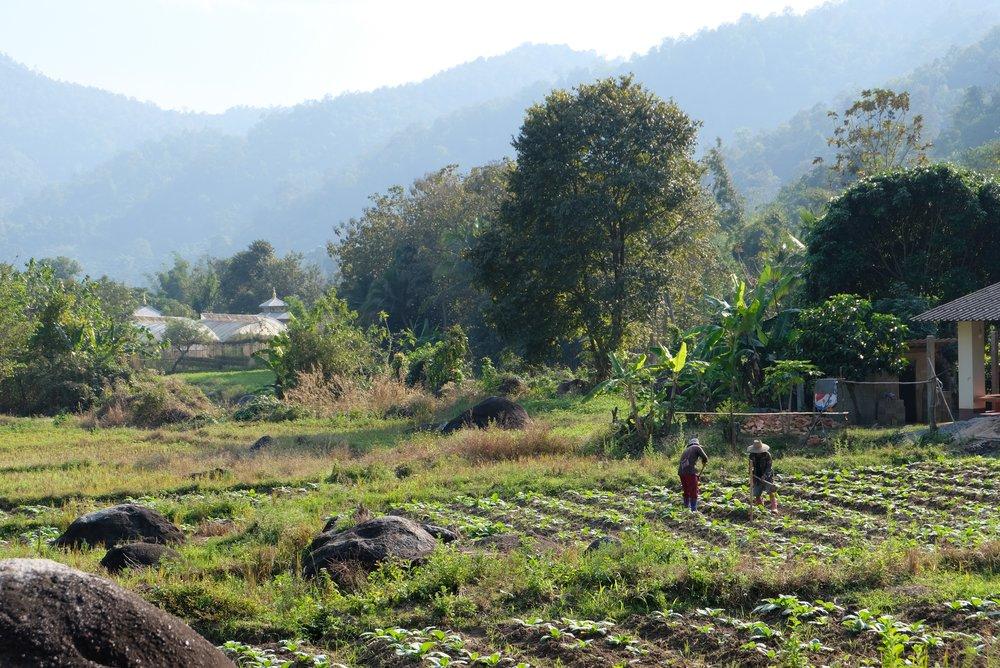 Tung Lakorn , Northern Thailand