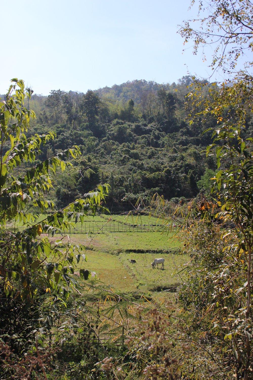 trekking chiang mai(1).jpg