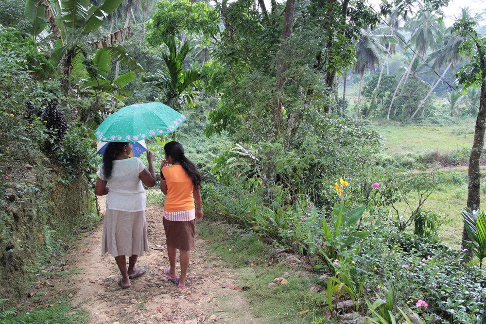 Neluwa is located near Sinharaja Rainforest