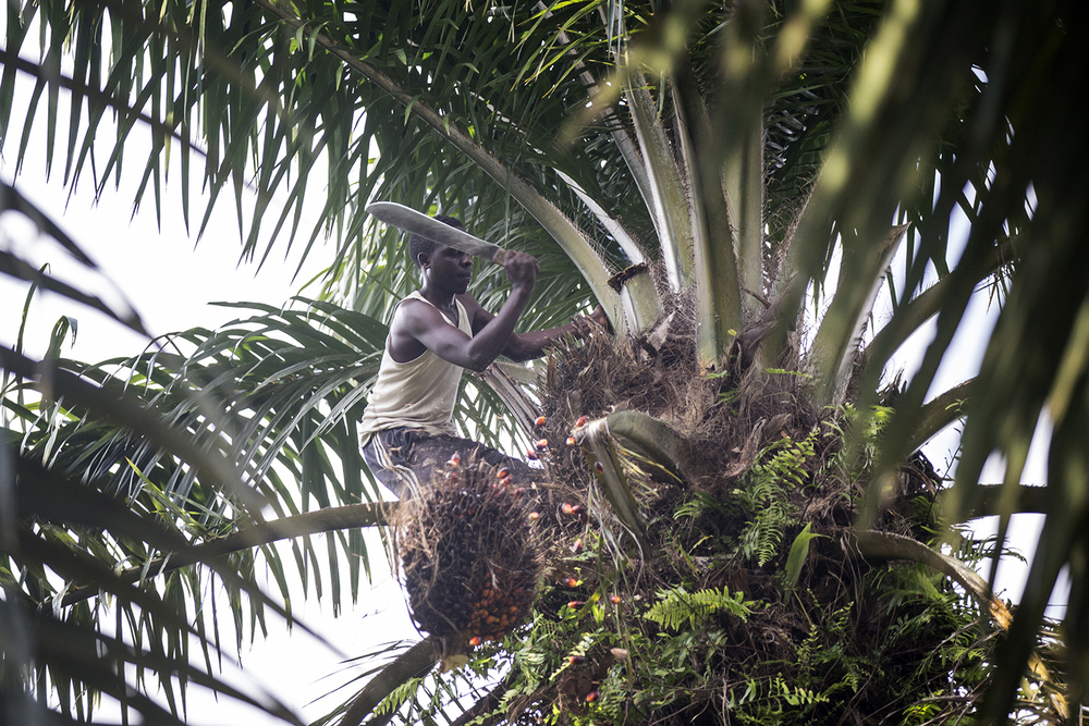 oxfam_novib_congo_manguredjipa_palm_oil_jeppe_schilder