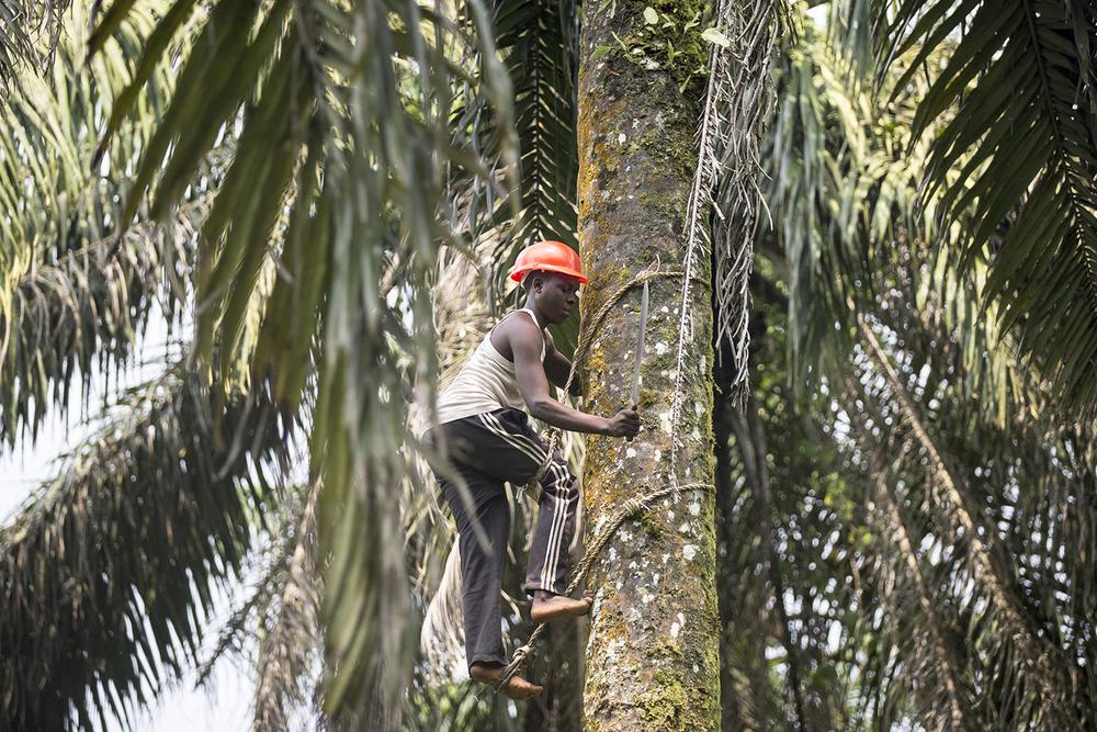 059_CACUDEKI_Palm oil_Manguredjipa.jpg
