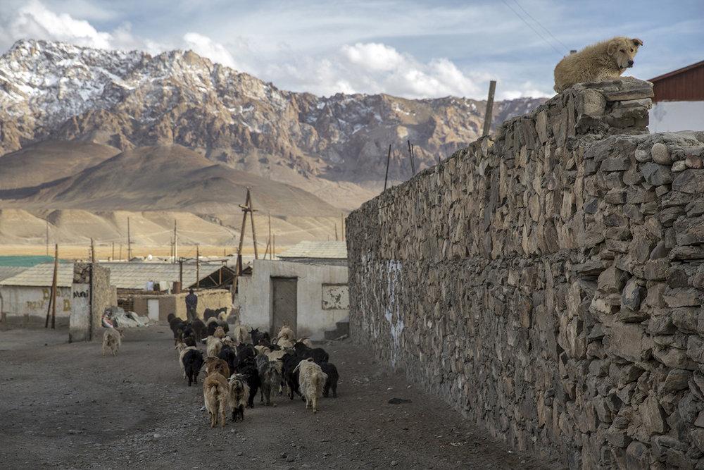 20180417_Tajikistan_Murghab_05.jpg