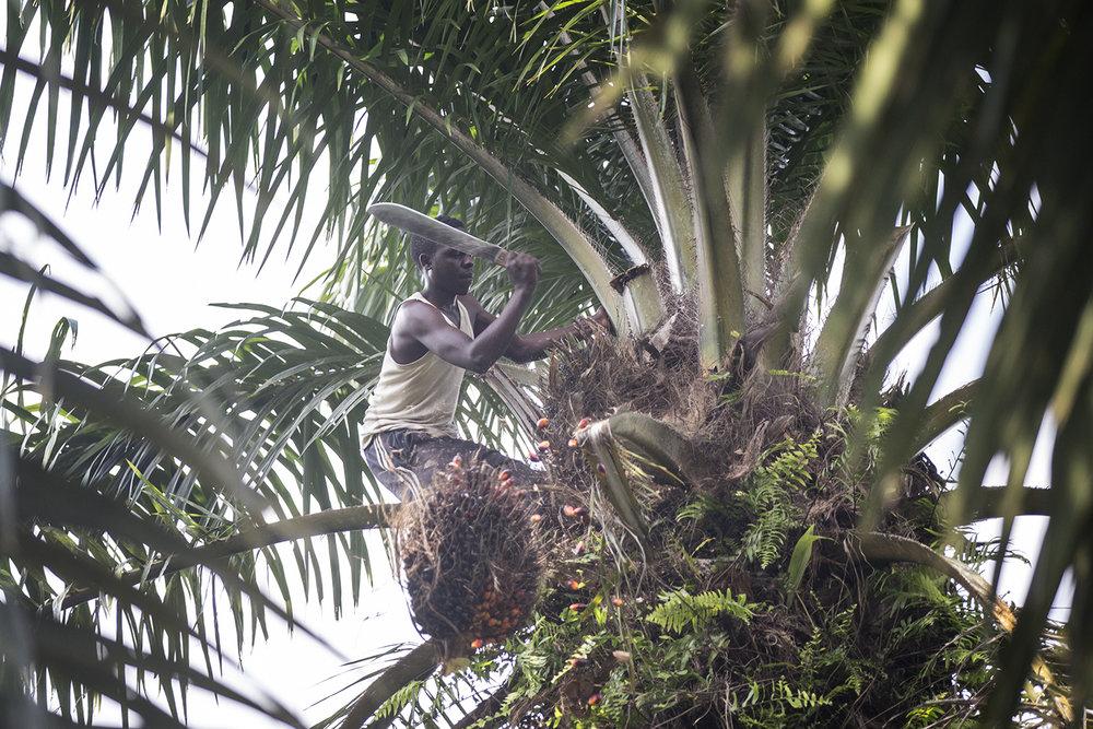 060_CACUDEKI_Palm oil_Manguredjipa.jpg