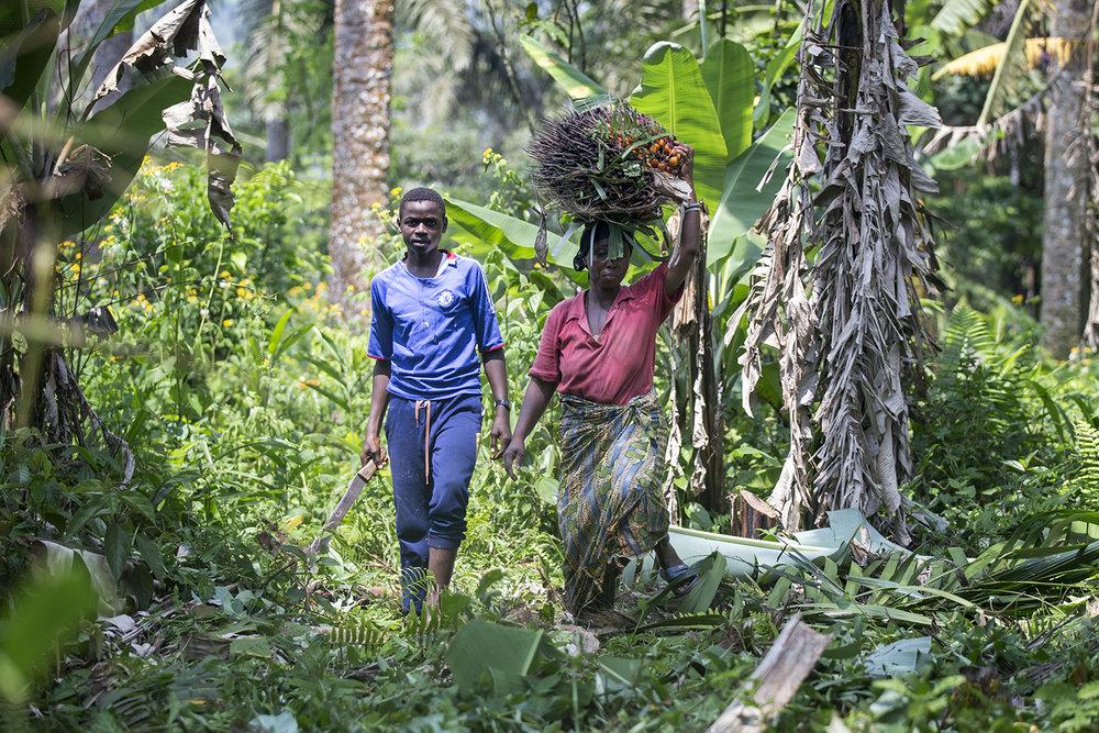 074_CACUDEKI_Palm oil_Manguredjipa.jpg