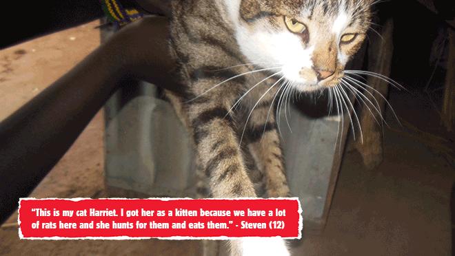 steven-cat.png