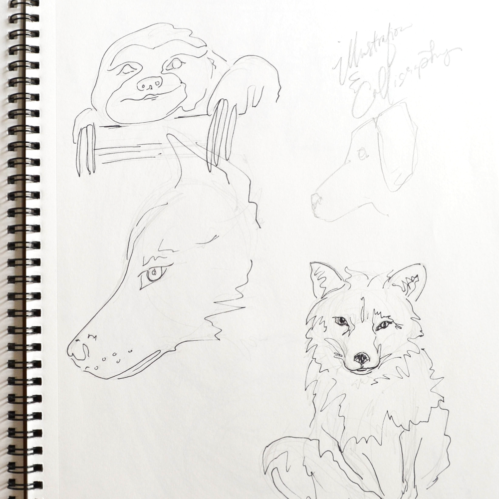 5 | Quick animal sketches.