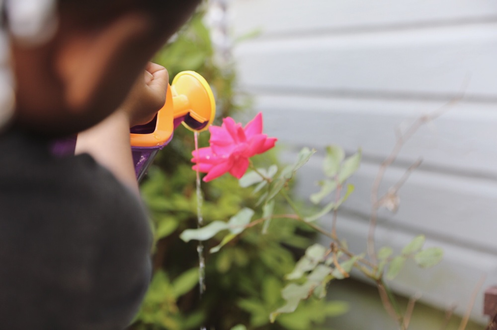 image of my daughter, Saylor, watering our roses.