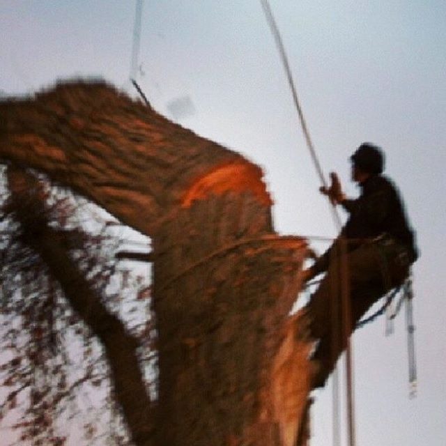 LOOKING FOR A BETTER INSURANCE COMPANY...ANY TREE SERVICE RECOMEND SOMEONE?  #ARBORIST#TREE#COMPANY#insurance company#tree climbers#crane service#