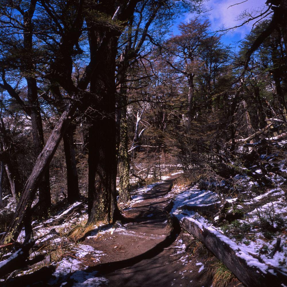 The Trail up to Fitz Roy Fuji GF670w - Fuji Velvia