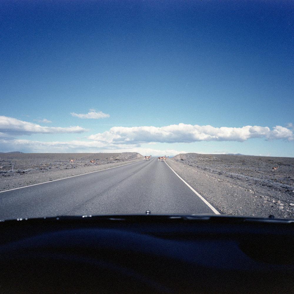 Guanacos on the way out of El Chalten Fuji GF670w - Kodak Vericolor
