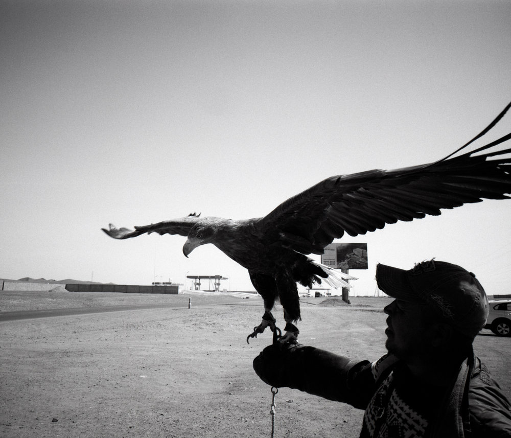 Roadside eagle Fuji GF670w | Ilford HP5