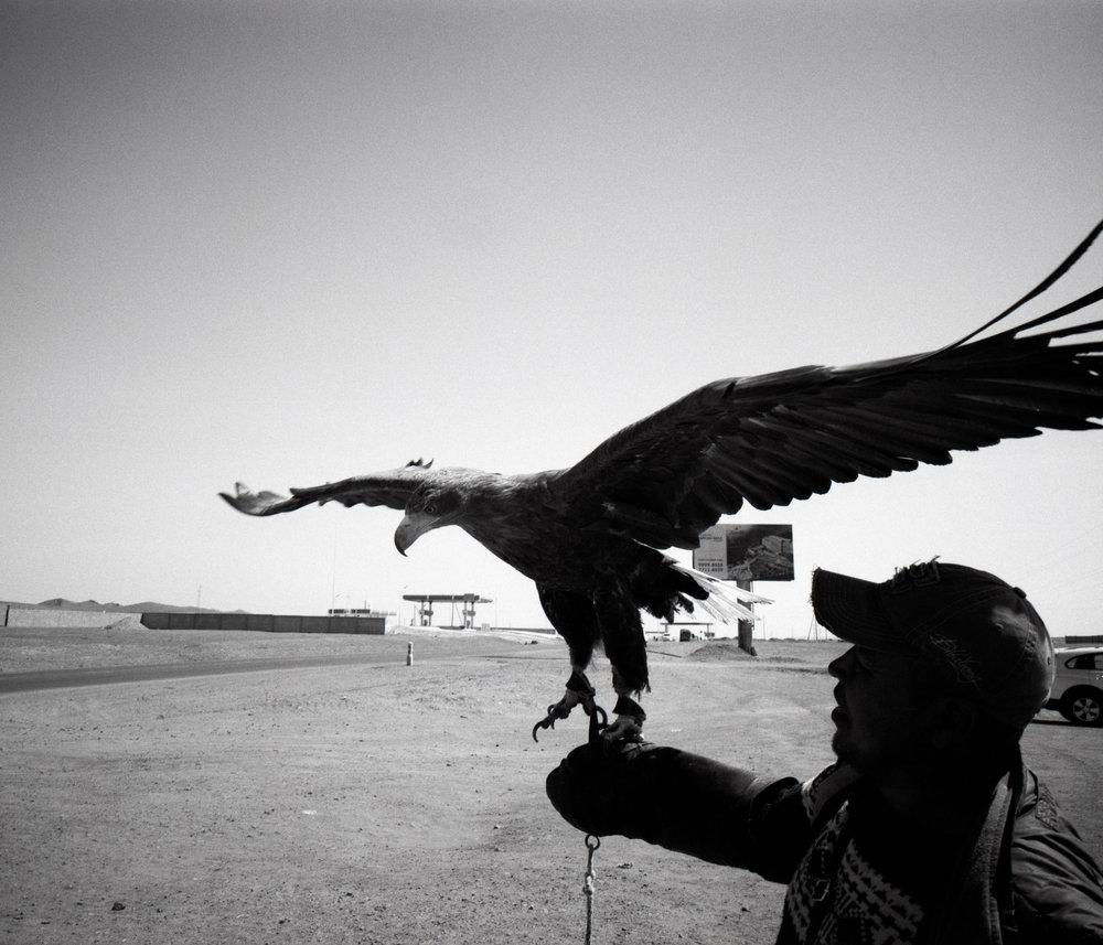 Roadside eagle Fuji GF670w | Ilford HP5