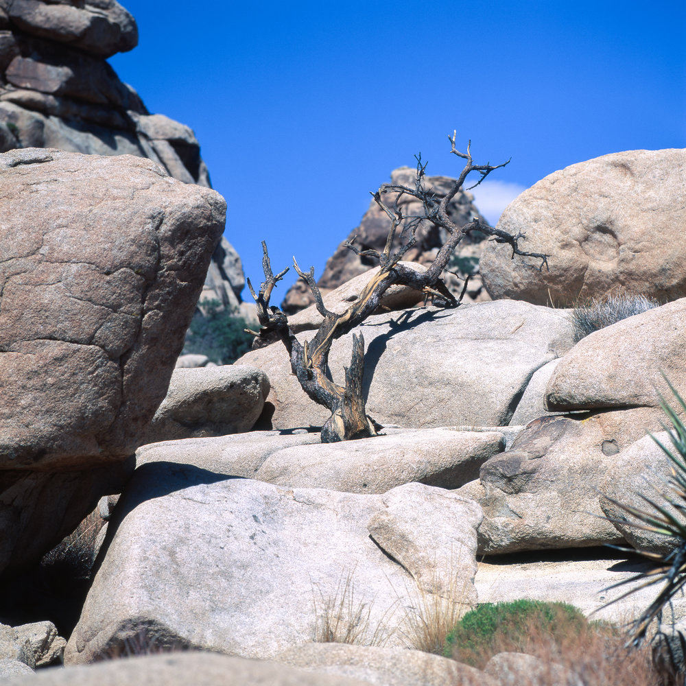 Somewhere in Hidden Valley Hasselblad 501cm | Fuji Velvia 50