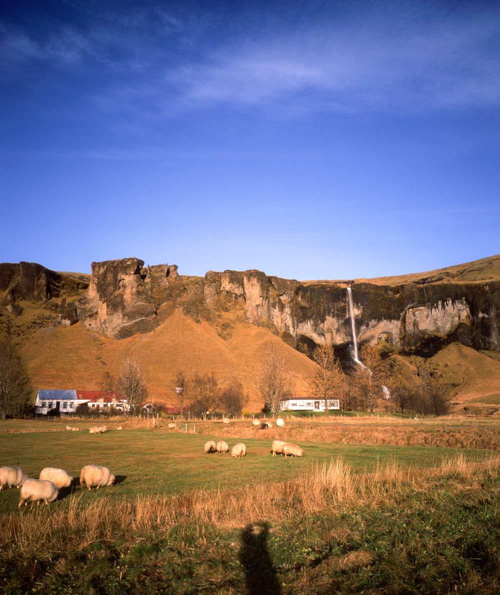 Fuji GF670w | Fuji Velvia 50 | Some Sheep
